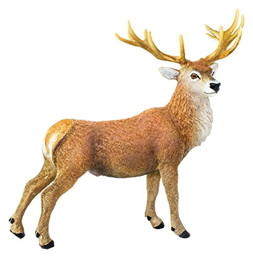 Safari Red Deer Ciervo