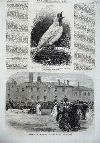 alford 1866 Pfeift Darstellung aus (Vogel Pfeift)
