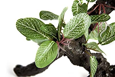 RepTech Fake Plant, small ficus on branch by RepTech