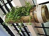 #2: Hanging Planter Made of Bamboo