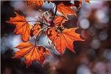 Posterlounge Leinwandbild 180 x 120 cm: Herbstfarben von Christian Müringer - fertiges Wandbild, Bild auf Keilrahmen, Fertigbild auf echter Leinwand, Leinwanddruck