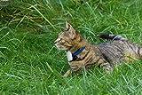 Girafus® Pro-Track-tor Haustier Hund Katze Kleintier Finder Sucher Ortung + Ladegerät - 4