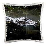 3drose PC _ 178453_ 1Florida Alligator Kopf in Wasser Kissen Fall, 40,6x 40,6cm