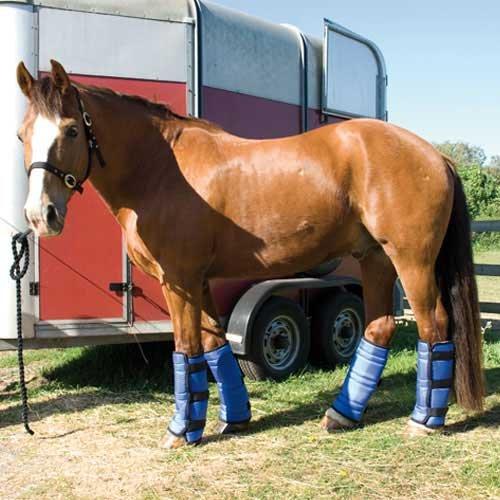Rhinegold Transportgamaschen für Pferde Blau navy