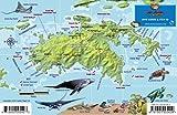 St. John USVI Dive Map Fish ID Virgin Islands Franko Maps Waterproof Fish Card -