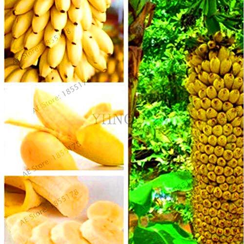 Go Garden Grande promotion! 100 pcs/sac rare jardin double banane pot bonsaï fruits bio flores mini/géant plante banane naine pour ho