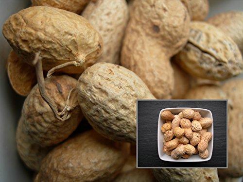 cacahuete-2-coques-arachis-hypogaea-peanuts