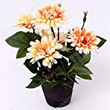 200Seeds / bolsa Gazania Rig Semillas Semillas Semillas de flores para la Bonsai Garden crisantemo Semillas De Flores Semillas semillas ENVÍO GRATIS del crisantemo