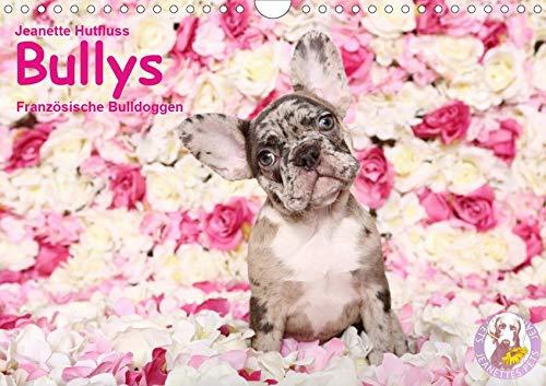 Bullys - Französische Bulldoggen 2020 (Wandkalender 2020 DIN A4 quer): Kleine Hunde mit großem Herz (Monatskalender, 14 Seiten ) (CALVENDO Tiere)