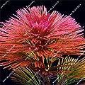Neu Neu 1000 Stück wie Kiefer Wasserpflanze Samen Indoor Zier Freies Verschiffen Aquarienpflanzen Aquarium Hintergrund von SVI - Du und dein Garten