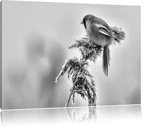 Monocrome, kleiner Vogel auf Weizen im Winter, Format: 80x60 auf Leinwand, XXL riesige Bilder fertig gerahmt mit Keilrahmen, Kunstdruck auf Wandbild mit Rahmen, günstiger als Gemälde oder Ölbild, kein Poster oder Plakat