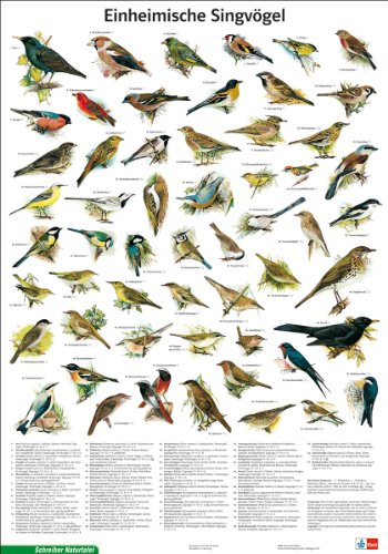 Schreiber Naturtafeln, Einheimische Singvögel -