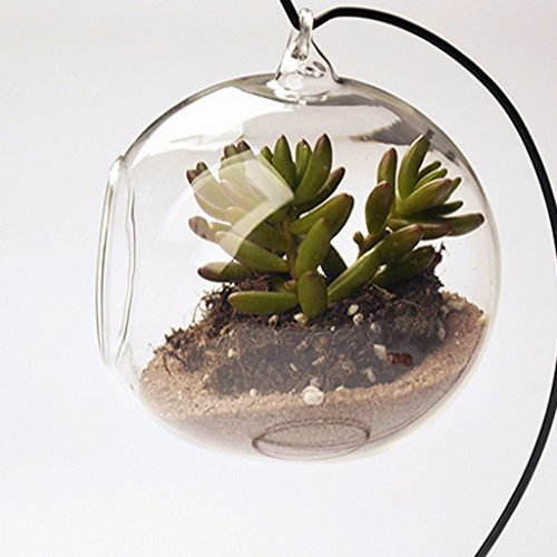 hodgea-piante-vaso-di-fiori-di-vetro-da-appendere-portacandele-tea-light-trasparente-diametro10