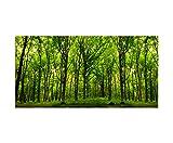 120x60cm - Fotodruck auf Leinwand und Rahmen Wald Bäume Natur Sonnenstrahlen - Leinwandbild auf Keilrahmen modern stilvoll - Bilder und Dekoration