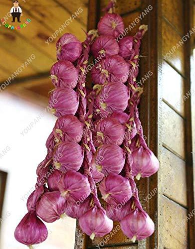 pinkdose piante 100pcs viola aglio piante sane bonsai organici verde piante ortive pianta facile da coltivare per la casa giardino di impianto