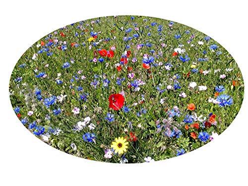100-150 m² Blumenwiese (Saat ohne Gras, mit Saathelfer) - für feuchte Standorte 1 kg Hummeln Bienenwiese Schmetterlinge Blumenmischung