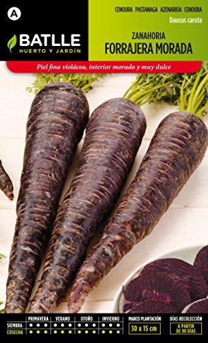 semillas-batlle-zanahoria-morada-forrajera