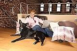 PetSafe Anti-Bark Spray Collar- Zitronella -