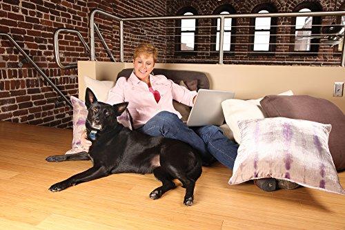 PetSafe Erziehungshalsband, automatische Sprühfunktion, Anti-Bell Hundetraining, Mikrofon Sensor, wetterfest wasserabweisend, umweltfreundlich, Nylonhalsband+Zitronenspray+Batterie, für Hunde 2,7kg+ - 3