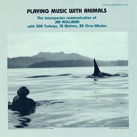Orca Pod Vocalizing