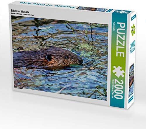 CALVENDO Puzzle Biber im Wasser Wasser Wasser 2000 Teile Lege-Grösse 90 x 67 cm Foto-Puzzle Bild Von | Les Produits Sont Vendu Sans Limitations  916127