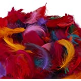 Daedal dream catchers Feather for Home Decor, 180-200 Numbers Feathers, 6-12cm (DDC117_22, Multicolour) - Pack of 4