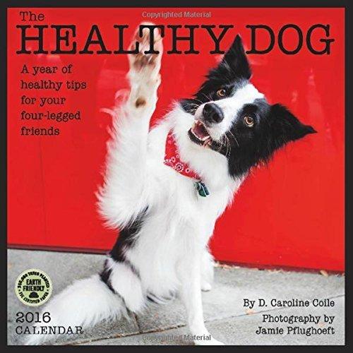 The Healthy Dog 2016 Wall Calendar by Dr. Caroline Coile (2015-07-22)