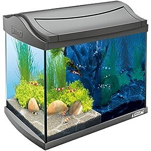 [Gesponsert]Tetra AquaArt Discovery Line LED Aquarium-Komplett-Set 20 Liter anthrazit (inklusive LED-Beleuchtung, Tag- und Nachtlichtschaltung, Innenfilter und Aquarienpumpe, ideal für Garnelen)