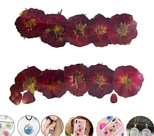 10er weinrot Kleinen China-Rose Gefärbt, Gepresst, Getrocknete Blumen Trocknen, Pflanzen Epoxy-Uv-Harz-Anhänger Halskette Nagel Kunst Schmuck Machen, Scrapbooking