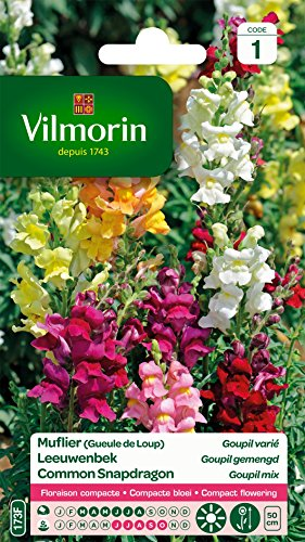 Vilmorin 5363041 Muflier, Multicolore, 90 x 2 x 160 cm
