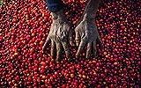 Caff-sommelier-Viaggio-attraverso-la-cultura-e-i-riti-del-caff