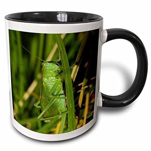 3dRose Makro-Grasshopper-Two Ton, schwarz-weiß-Becher aus Keramik, Mehrfarbig, 10.16cm x 7,62x-Uhr (Grasshopper Uhr)
