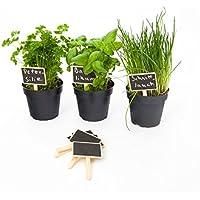 esto24® 10er Set Pflanzschilder Pflanzenstecker aus Holz mit Tafelfläche zum beschriften mit Kreide