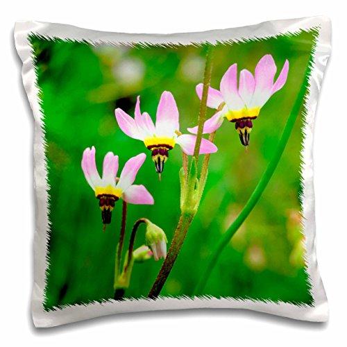 Danita Delimont - Flowers - Shooting Star flowers, Mission Trails Park, San Diego, California, USA - 16x16 inch Pillow Case (pc_205748_1) (Trails Park Mission)