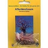 Bonsai - 6 Samen Adansonia digitata, Affenbrotbaum, Baobab, 90038