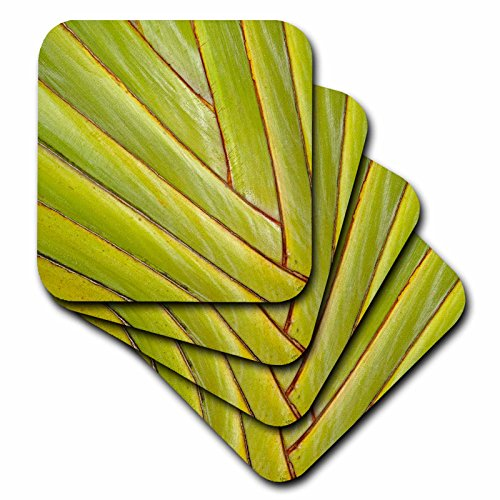 3drose-cst-206655-2-pattern-in-leaf-stems-of-travelers-palm-tree-fort-myers-florida-usa-soft-coaster