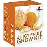 Juicy FRUTTA SEME Kit per far crescere SCATOLA REGALO DA Thompson & Morgan - 5 Fresh flavoursome FRUTTA to Grow ;Fragola,melone ,Rabarbaro ,Physalis & Pomodoro SEMI