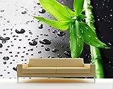 Vlies Fototapete - Frischer Bambus - 225x150 cm - Inklusive Kleister - Tapetenkleister – Bild auf Tapete – Bildtapete – Foto auf Tapeten – Wand – Wandtapete – Vliestapete – Wanddeko - Design