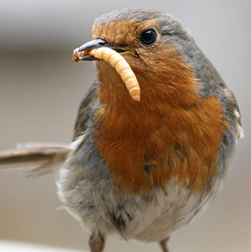 5KG STANDARD WILD BIRD DRIED MEALWORMS SOLD BY MALTBY'S CORN STORES (EST 1904)