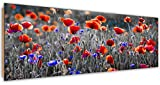 Feeby. Wandbild, Deco Bild, gedrucktes Bild, Deco Panel, Bild, Panoramabild 90x30 cm, MOHN, NATURA, ROT