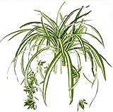 Best Jardin à la maison Plantes d'intérieur - Bird Fiy Spider Plante Simulation plantes d'intérieur extérieur Review