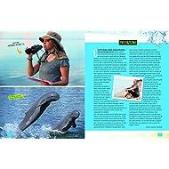 Delfini-Absolute-expert