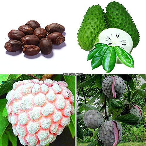 Go Garden Type5: 10Pcs jardin délicieux fruits Arbre Lychee Graines Eh7E