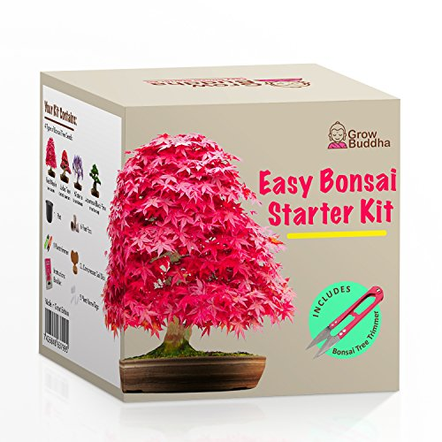 Züchte dein eigenes Bonsai - Züchte einfach 4 Arten von Bonsai-Bäumen mit unserem kompletten, anfängerfreundlichen Starter-Samen-Set - Geschenk set, Einzigartige Geschenkidee