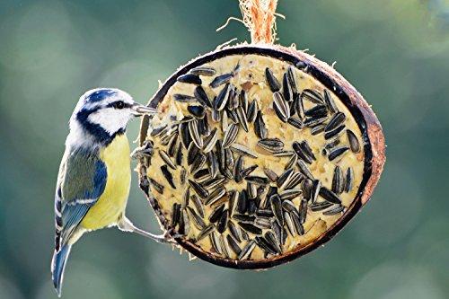 dobar Zehn gefüllte Kokosnüsse in 5 Vogelfutter-Sorten zum Aufhängen - 8
