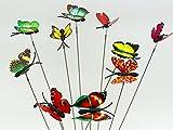 Diseño de hada del jardín en miniatura SecretRain botes para especias de flores diseño con texto en inglés de maceta 10 piezas de colores brillante de mariposa de vinilo