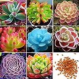 Wekold Set Sukkulenten Kombination - 50 Samen Desktop Mini Kombination Gemischte Saftige Grüne Pflanze Blume Topf Samen