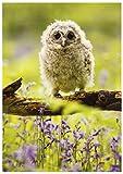 Blüten und Schleifen Nature World offen Fotografien Geburtstag Karte