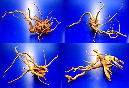 Rote Moorwurzel/Moorkienholz, Gr. S Traumwurzel 20-30cm
