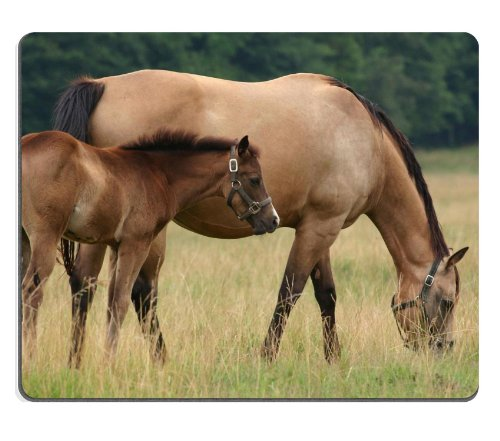 horse-stallion-cub-walk-food-grass-mouse-pads-customized-made-to-order-support-ready-9-7-8-inch-250m